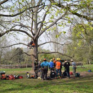 CS Arboriste Elagueur©C.LEBRUN EDB (1)r